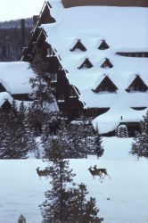 Deer in front of the Old Faithful Inn in winter Photo