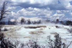 Aphrodite Terrace - Mammoth Hot Springs Image