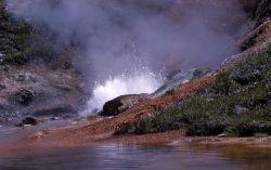Blood Geyser at Artists' Paintpots - Gibbon Geyser Basin Photo