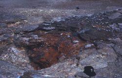 Big Whirligig Geyser vent - Norris Geyser Basin Photo