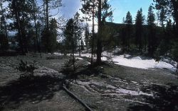 Distant view of Steamboat Geyser in steam phase - Norris Geyser Basin Photo