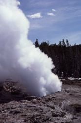 Steamboat Geyser - Norris Geyser Basin Photo
