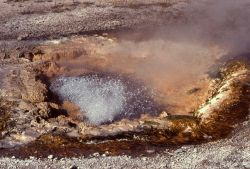 Pump Geyser - Upper Geyser Basin Photo