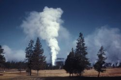 Distant view of Castle Geyser - Upper Geyser Basin Photo
