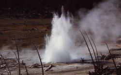 Seismic Geyser - Upper Geyser Basin Photo
