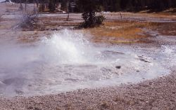 Bulger Geyser - Upper Geyser Basin Photo