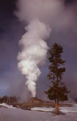 Castle Geyser in winter - Upper Geyser Basin Photo