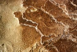 Detail on a new terrace - Mammoth Hot Springs Photo