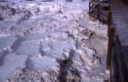 Minerva Terrace after removal of material near boardwalk - Mammoth Hot Springs Photo