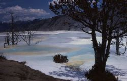Blue Spring on the Main Terrace - Mammoth Hot Springs Photo