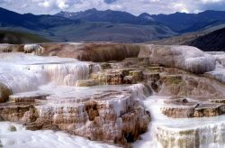 Minerva Terrace - Mammoth Hot Springs Photo