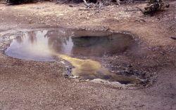 Corporal Geyser & Dog Leg Spring with sulfur - Hot Springs, Norris Geyser Basin Photo