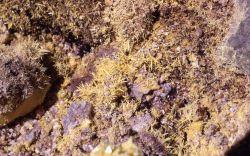 Sulfur crystals - Monument Geyser Basin - Mineral deposits Photo