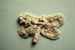 Butterfly coated with travertine - Mineral deposits Photo