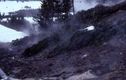 Increased activity with dead trees - Mud Pots, Mud Volcano area Photo