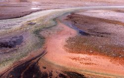 Algae in runoff channels Photo