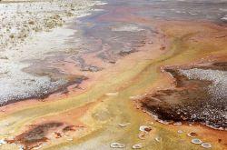 Algae in runoff channels Photo