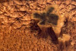 Close up of Thermophilic algae Photo