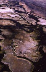 Algae mat Photo