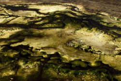 Algae in thermal water Photo
