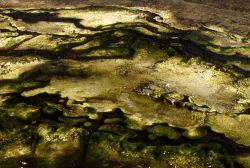 Algae in thermal water Photo
