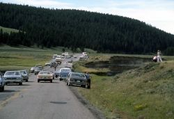 Traffic in Hayden Valley Photo
