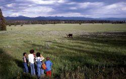 Visitors viewing moose Photo