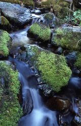 Small stream & moss covered rocks Photo