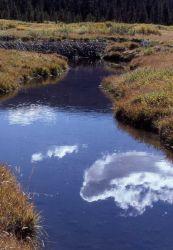 Thorofare Creek & beaver lodge Photo