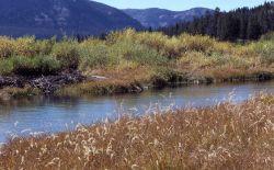 Thorofare Creek Photo