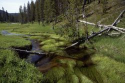 Obsidian Creek Photo