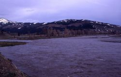 Lamar River at Soda Butte confluence Photo