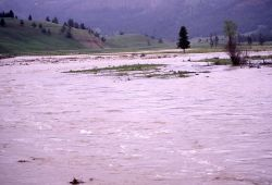 Soda Butte Creek during high run off Photo