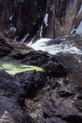 Spring adjacent to the Brink of the Lower Falls Photo