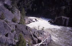 Knowles Falls on the Yellowstone River in Black Canyon Photo