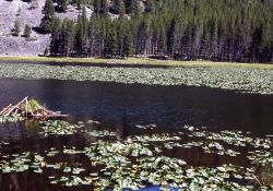 Harlequin Lake Photo