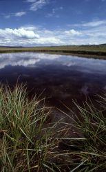 Pond in Hayden Valley Photo