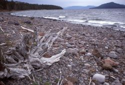 Driftwood at Park Point on Yellowstone Lake Photo