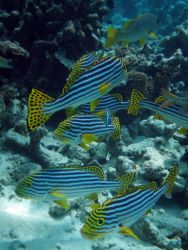 Maldives Photo