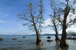 Andaman and Nicobar Photo