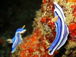 Nudibranch Photo