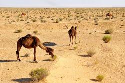 Kebili - Tunisia Photo