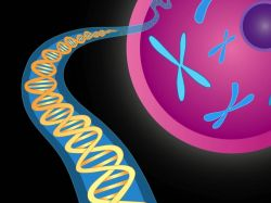 Illustration of chromosomes and DNA double helix Photo