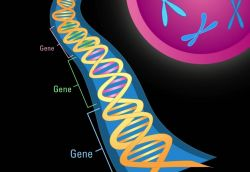 Illustration of double helix and gene segments Photo
