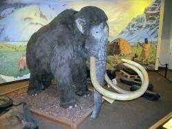 Mammoths Photo