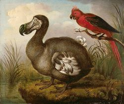 Dodo Bird Photo