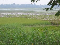 India's Largest River Island - Majuli, Assam Photo