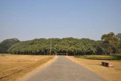 The Great Banyan Photo
