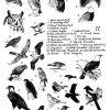 Birds 17 Photo