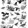 Birds 19 Photo